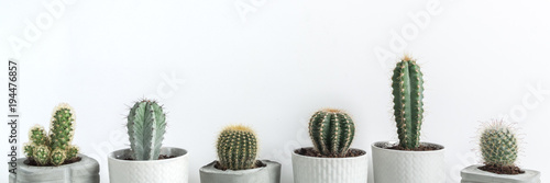 Poster Cactus Panorama with many cactuses in concrete diy pots on a white background