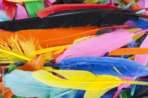 Foto op Plexiglas Paradijsvogel Colorful feathers. Parrot colors duck feather texture.