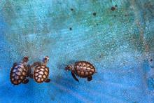 Cute Little Baby Sea Turtles Swimming Inside Water Tank In Nursery