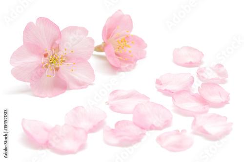 In de dag Kersen 桜 花びら 春 背景