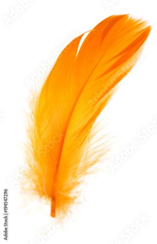 Beautiful orange feather on white background
