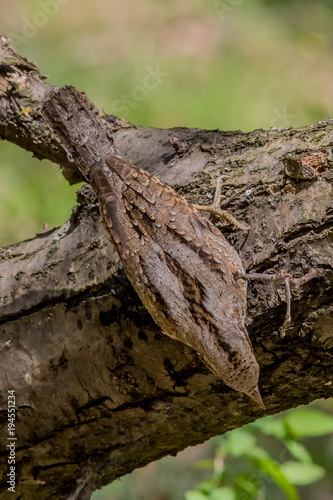 Cadres-photo bureau Bonsai wryneck, bird, nature, wildlife