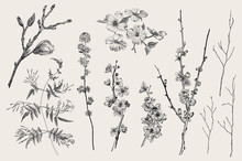 Blooming Gargen. Spring Flowers And Twig. Magnolia, Spirea, Cherry Blossom, Dogwood, Jasmine, Quince, Birch Twig. Vintage Vector Botanical Illustration. Black And White