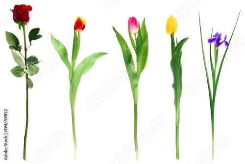 Foto op Plexiglas Tulp beautiful various blooming flowers isolated on white