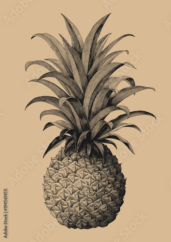 Fototapety, obrazy: Pineapple hand drawing vintage engraving style