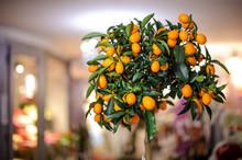 Small Lushy Lemon Tree With Ye...