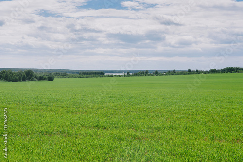 Foto op Canvas Platteland Field at the edge of the village, grass, summer day