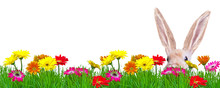 Springflower Background