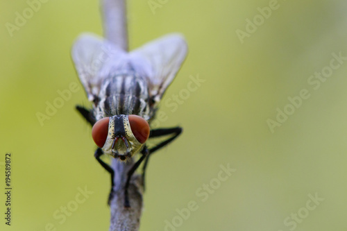 Image of a flies (Diptera) on a brown branch. Insect. Animal