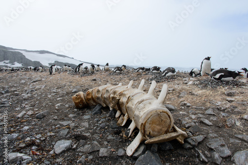 Poster Antarctique Whale's backbone on beach