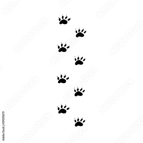 Fotografija  Prints black paws of the walking animal