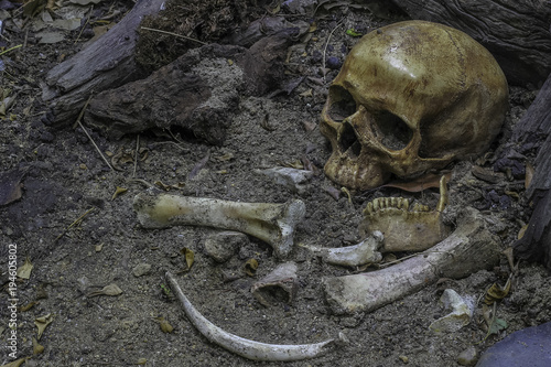 Skull and bones digged out from pit in the scary graveyard