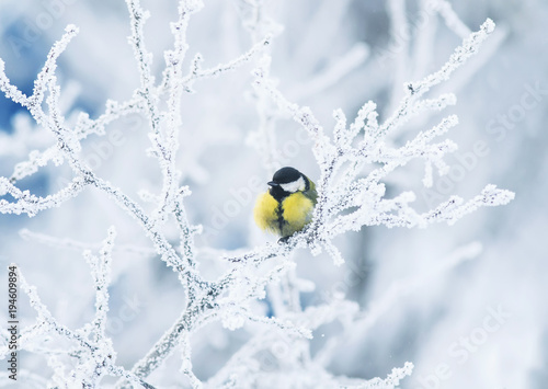 Pinturas sobre lienzo  cute little chickadee bird sitting among the tree branches covered with cold sno