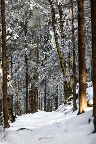 las-zimowy-krajobraz-gorski-gory-stolowe-w-polsce