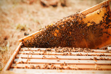 Bee Hive With Honeycomb Frame ...