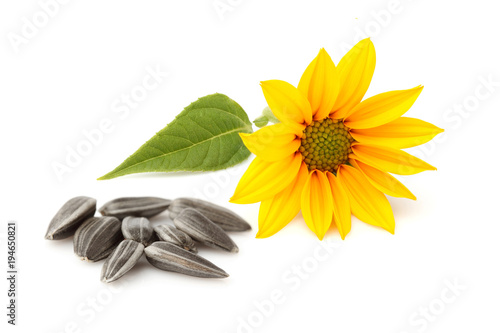 Fresh sunflower and sunflower seeds isolated.