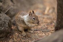 Squirrel,animal,