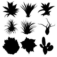 Black Silhouettes Of Cactus, Agave, Aloe, And Prickly Pear. Cacti Set. Vector.