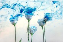 Flower Water Blue Background White Inside Under Paints Acrylic Rose Smoke Streaks