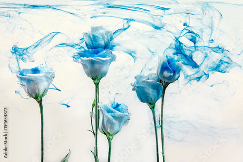 Keuken foto achterwand Paardebloemen en water flower water blue background white inside under paints acrylic rose smoke streaks