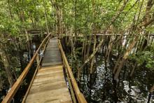 A Wooden Walkway At A Jungle L...