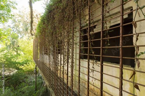 Persianas de alambrado enredado de plantas de un balcón de un hotel abandonado Canvas Print