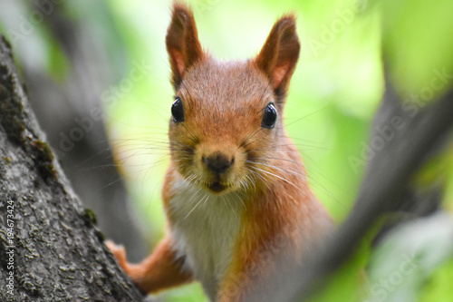 Beautiful and cheerful squirrel in the forest.