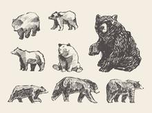 Set Drawn Wild Beers, Vector Illustration, Sketch
