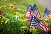Low Angle View Of Little United States Flags In Flower Bed