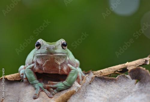 Türaufkleber Makrofotografie Frog in new styles