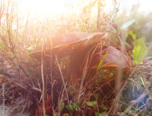 Foto auf Gartenposter Landschappen mushrooms in the grass in a forest glade