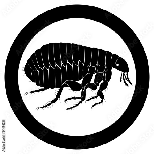 Vector image of flea silhouette Poster