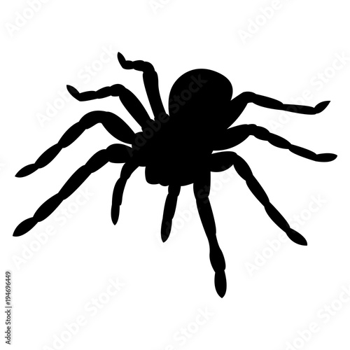 Photographie Vector image of spider silhouette