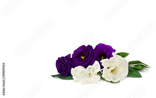 Violet And White Flowers Eustoma Exaltatum Ssp Russellianum Common