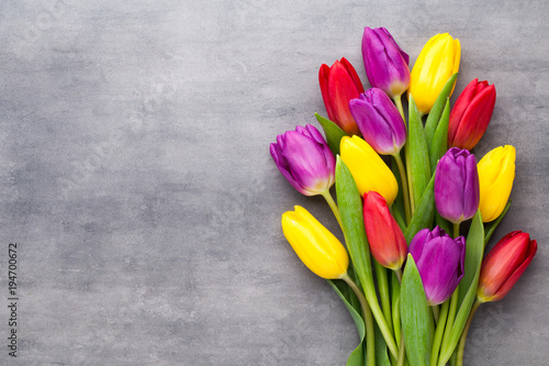 Poster Tulp Multicolored spring flowers, tulip on a gray background.