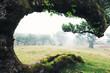 Krummer, gebogener Baum umrahmt Aussicht auf nebliges Feld mit Bäumen