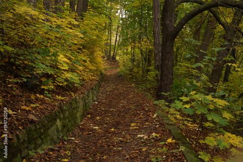 Tuinposter Weg in bos Wald im Herbst