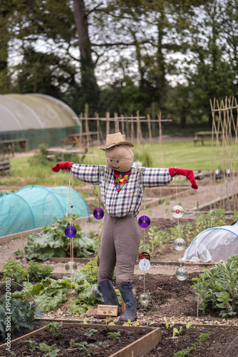 Photo Home made scarecrow protecting new Spring vegetables in allotment gardens in Spr