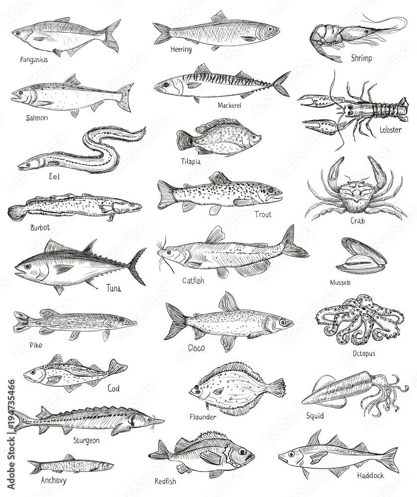 Fototapeta Fish and seafood hand drawn graphic illustration