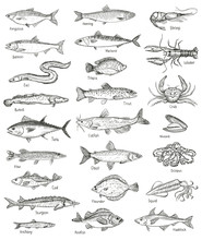 Fish And Seafood Hand Drawn Gr...