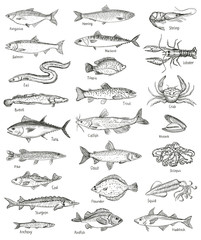 Fototapeta Fish and seafood hand drawn graphic illustration