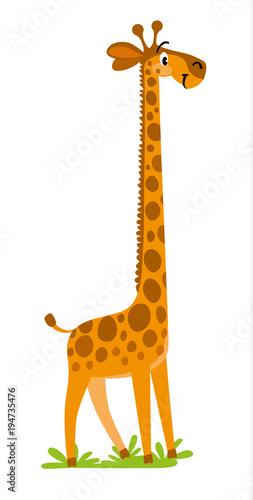 Photo  Funny smiling Giraffe