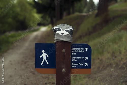 Fotografia, Obraz  Poste con señal de dirección en el camino de un bosque