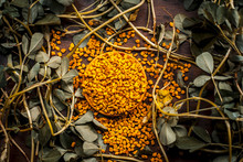 Close Up Of Fresh Raw Fenugreek With Its Seed On A Brown Wooden Surface In  Dark Gothic Colors.It Is Beneficial For Hair,skin And Physical Health.