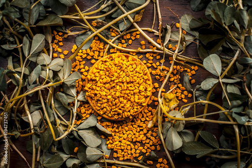 Fototapeta Close up of fresh raw fenugreek with its seed on a brown wooden surface in  dark Gothic colors.It is beneficial for hair,skin and physical health. obraz
