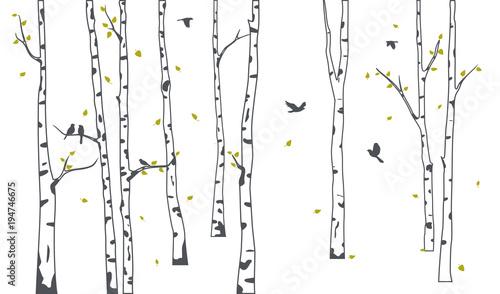 Brzoza drzewo z jelenia i ptaki sylwetka tło