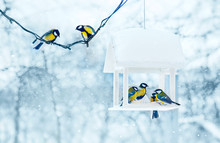 Tit Birds In White Wooden Feeder Winter Snowy Frosty Day