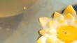 Beautiful wax colored candles in the form of lotus flowers burning and extinct floating on the water, close up view