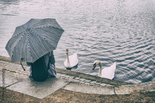 City park lifestyle scene of woman relaxing by pond feeding two swans outdoor Poster