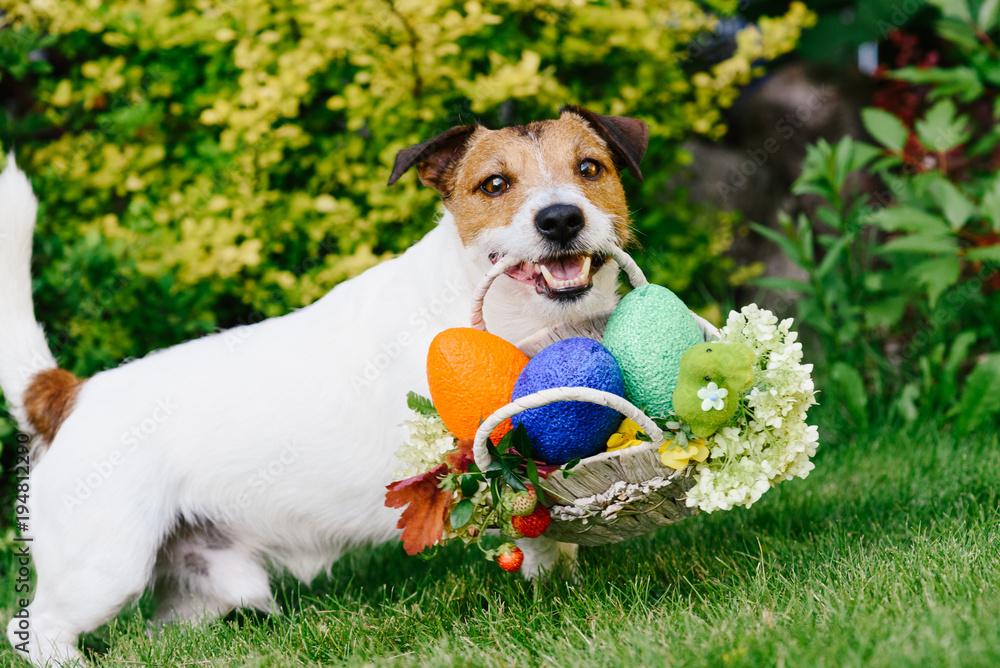 Funny dog at egg hunt during Eastertide